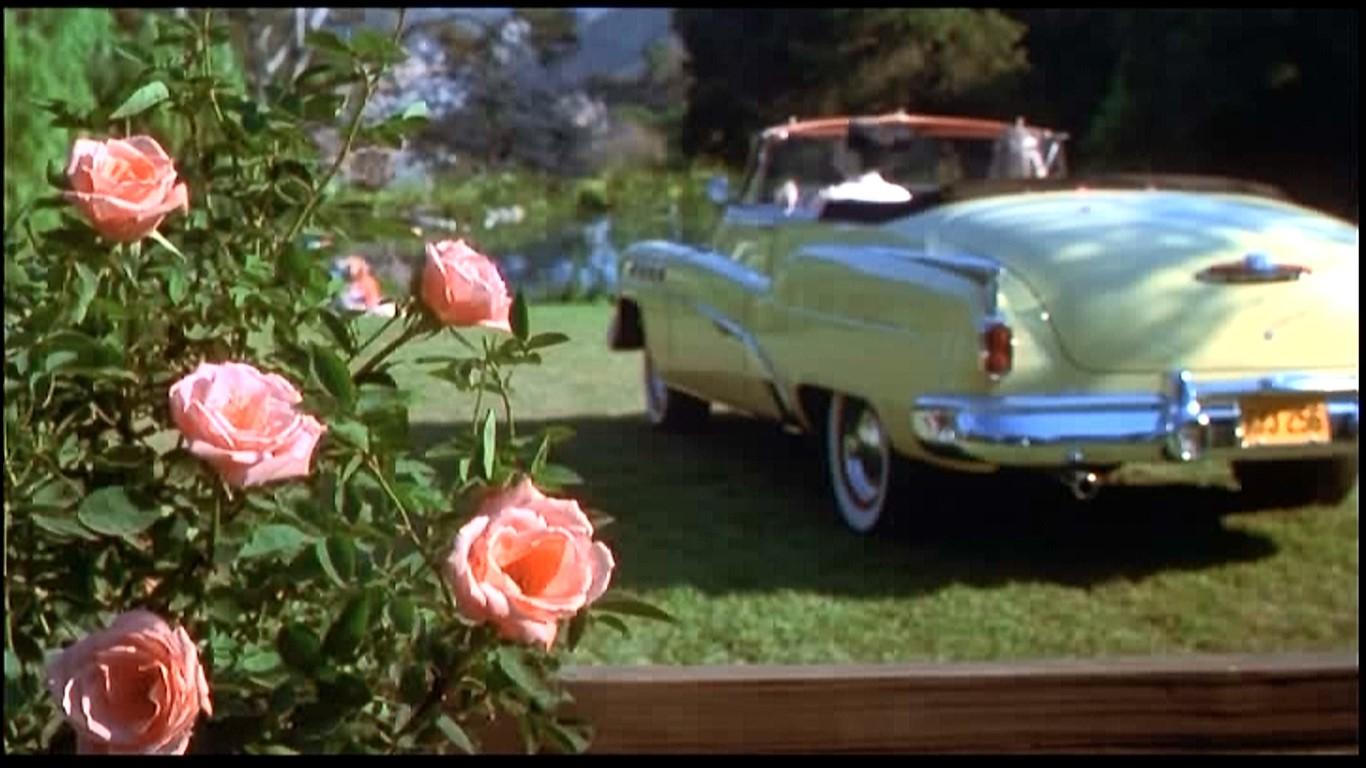 恋人の水辺(恋人池)に咲くピンクの薔薇。凄く可愛らしい💛