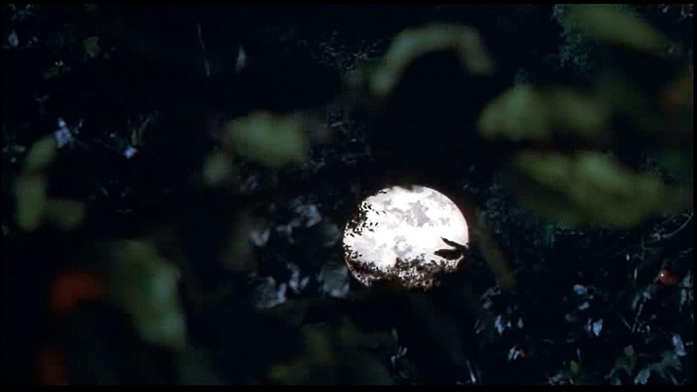 リンゴをもぎとった後に見えてきたのは綺麗な満月✨