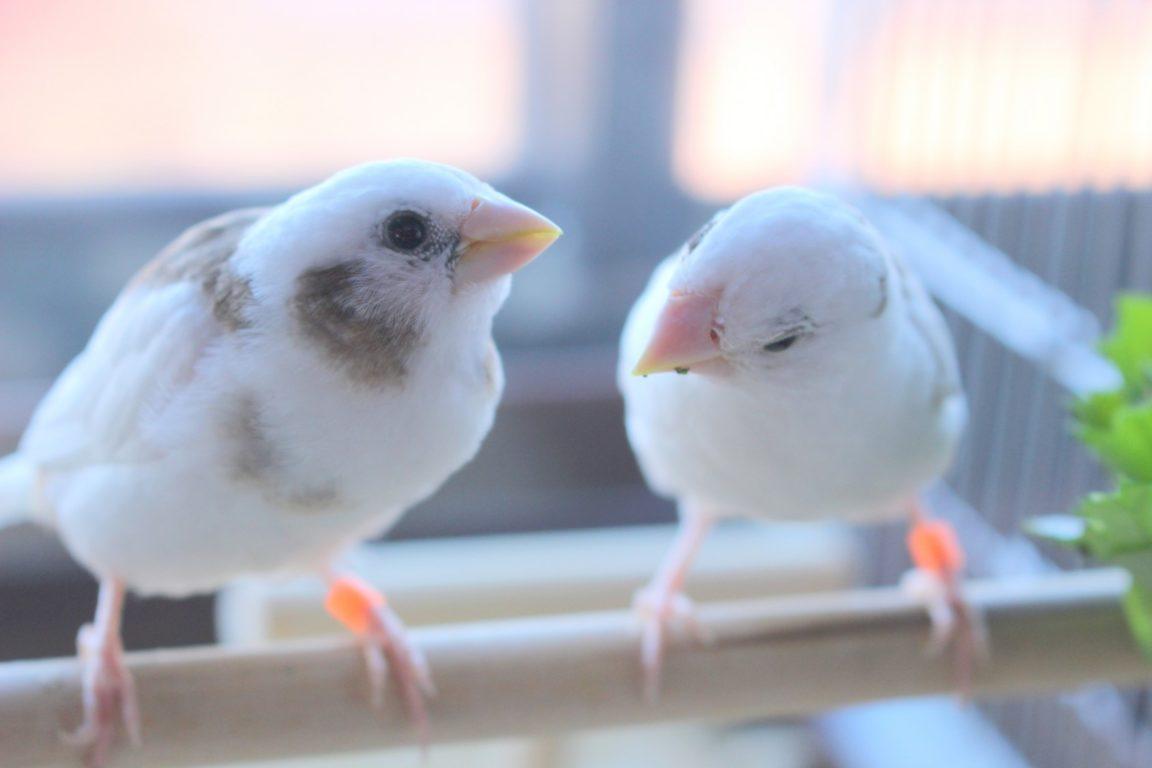 楽しそうに歌う小鳥たち